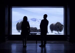 Sally and Glen look at the buffalo at the natural history museum.